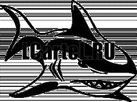 Акула # s641