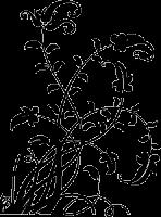 Трафарет Растительный Орнамент